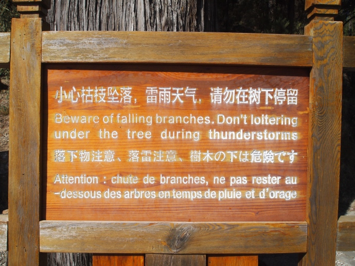 I love Chinglish!