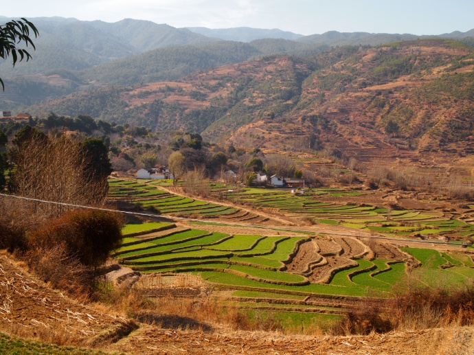 terraced fields