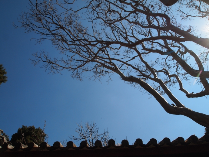 Trees and blue sky over Haiyun Temple