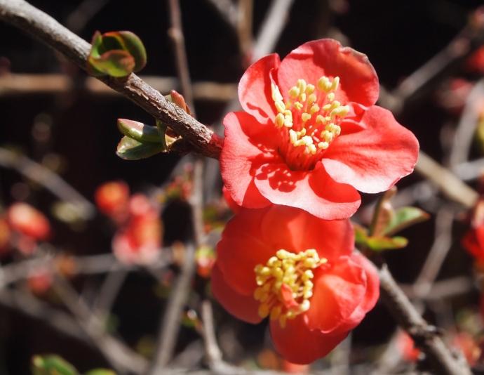 festive red flower