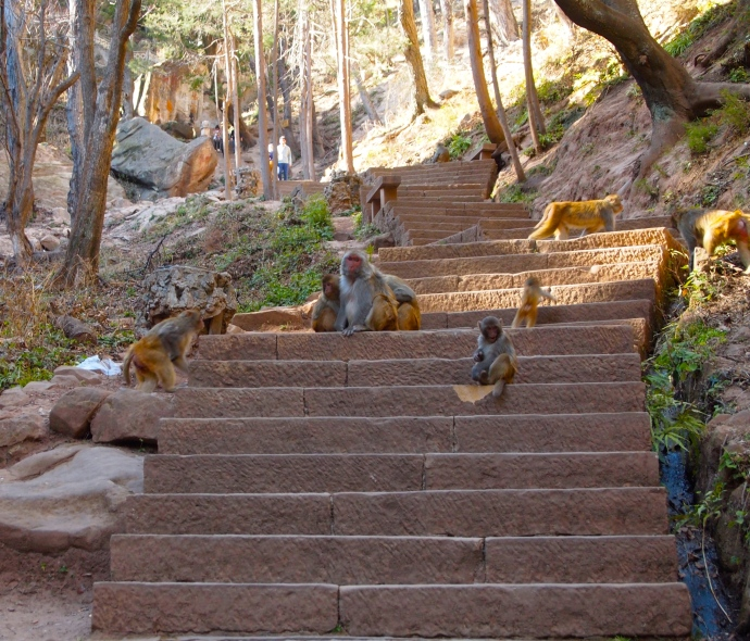 monkeys on the steps to Baoxiang Temple