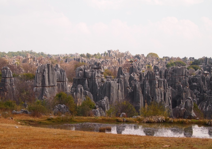 view from the minibus around the Stone Forest