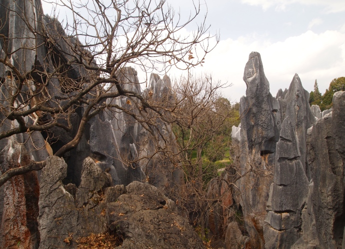 Major Stone Forest