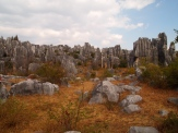 Colorful stone forest