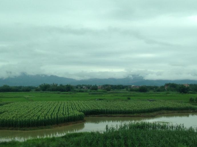 Farmland out the bus window