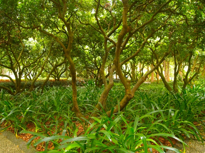 trees & grasses