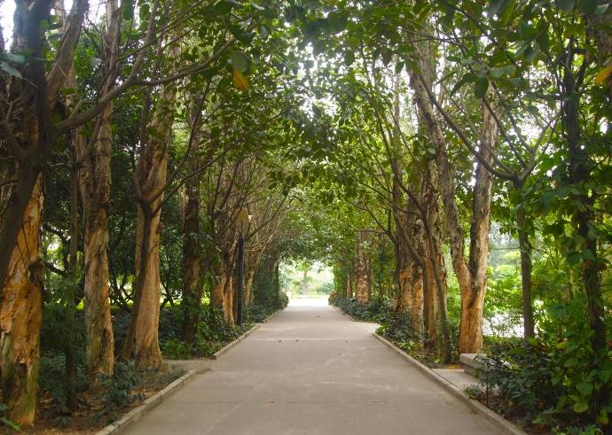 tree-line pathway