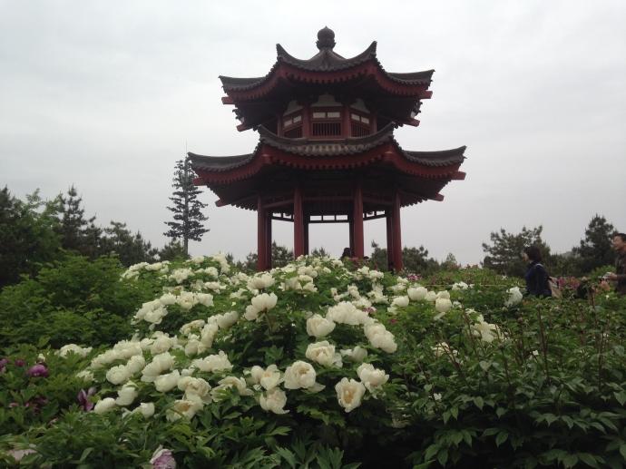 Peony Pavilion at Big Wild Goose Pagoda