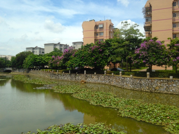 One of many lotus ponds on the campus