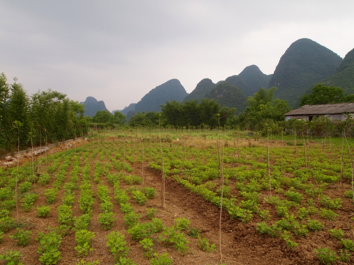 the farmland of Yangshuo