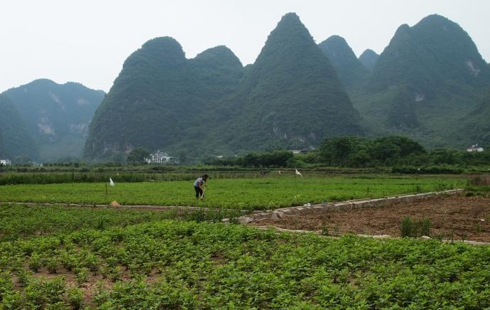a farmer in the field