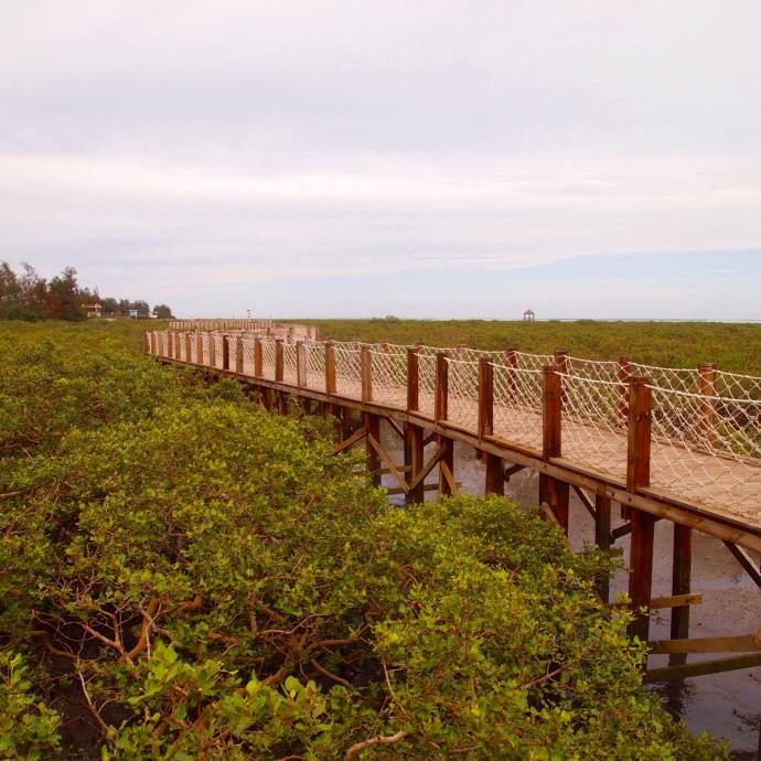 walkway through the beihai golden bay mangrove ecotourist region