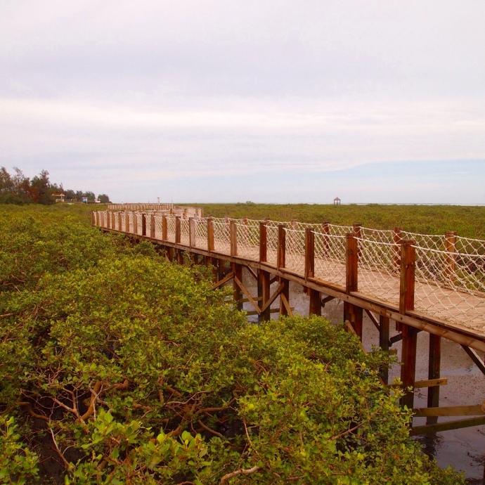 walkway through the beihai golden bay mangrove ecotourist region