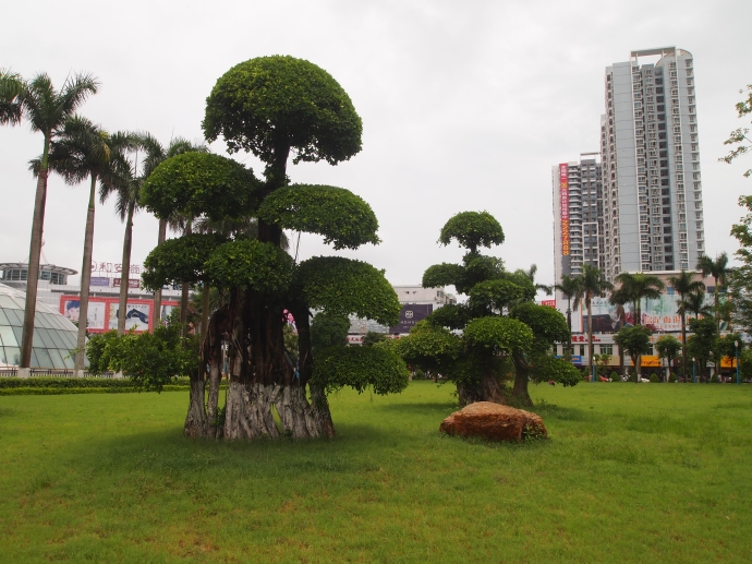 Bonsai at Beibuwan Square