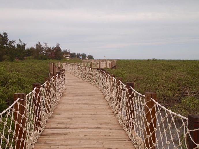 walkway through the mangroves