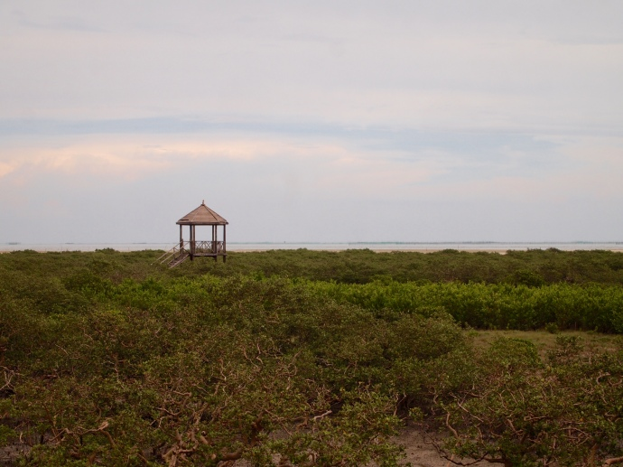 pavilion in the mangroves