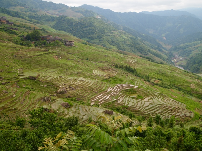 the Longji Rice Terraces at the viewpoint