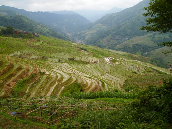 Longji Rice Terraces