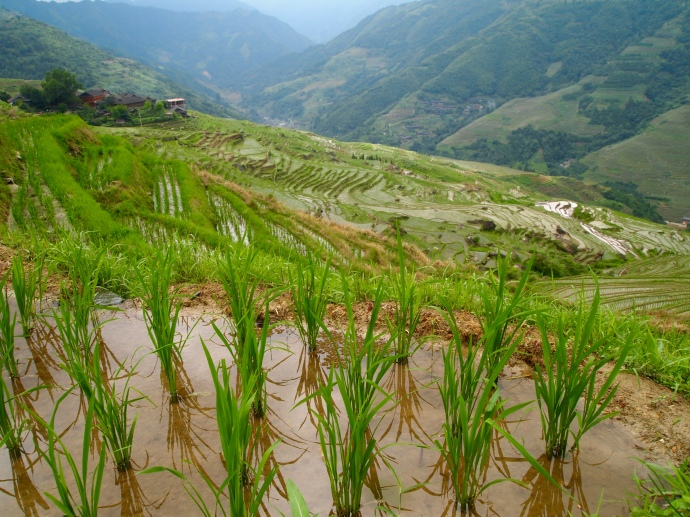 up close and personal at the Longji Rice Terraces