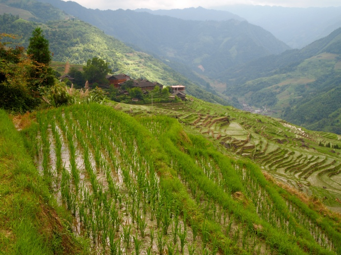 water filled rice terraces