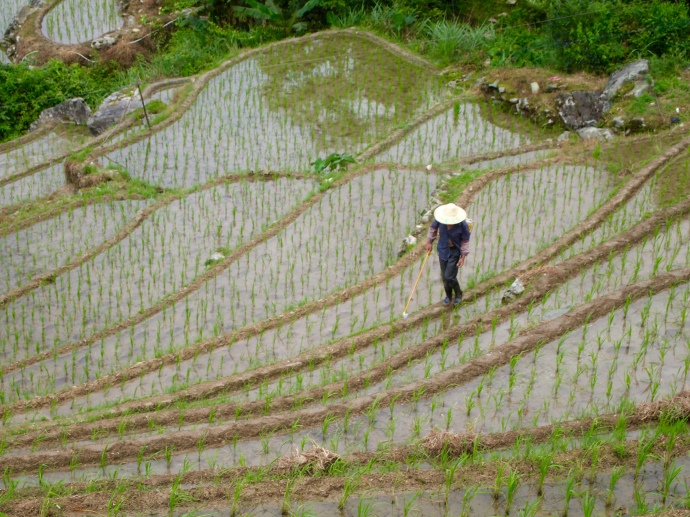 a farmer on the rice terraces
