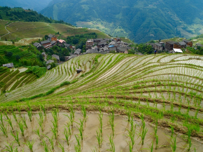 looking down on the rice terraces approaching Seven Stars with Moon